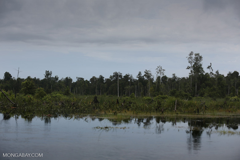 Degraded peatland in Borneo [kalteng_0490]
