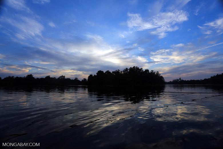 Borneo peat forest at daybreak