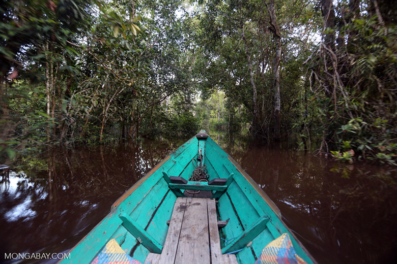 Navigating the peat forest in Borneo