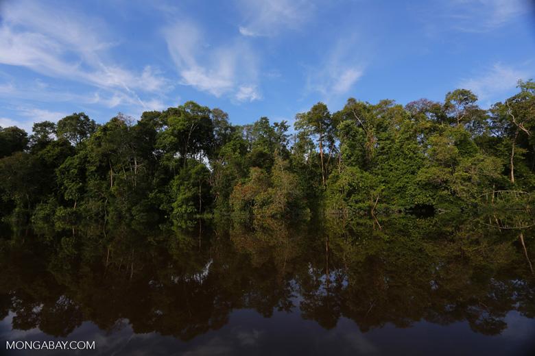Peat forest in Borneo [kalteng_0636]
