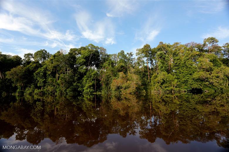 Peat forest in Borneo [kalteng_0637]