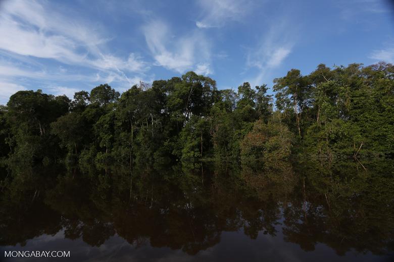 Peat forest in Borneo [kalteng_0638]