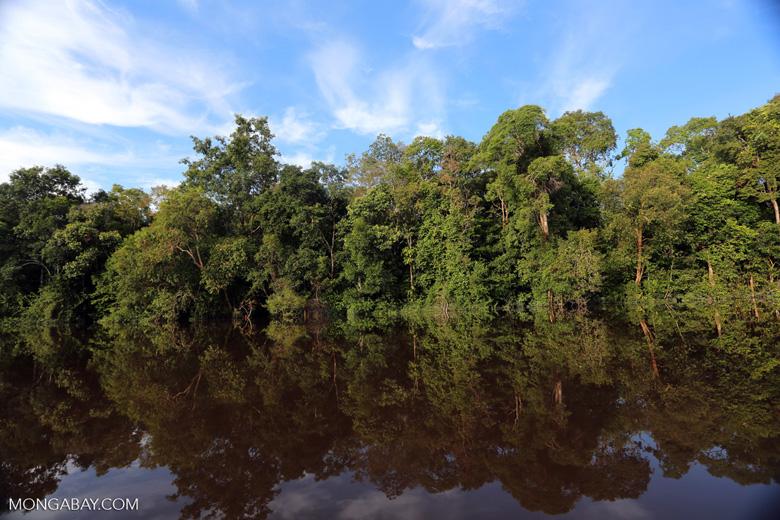 Peat forest in Borneo [kalteng_0642]