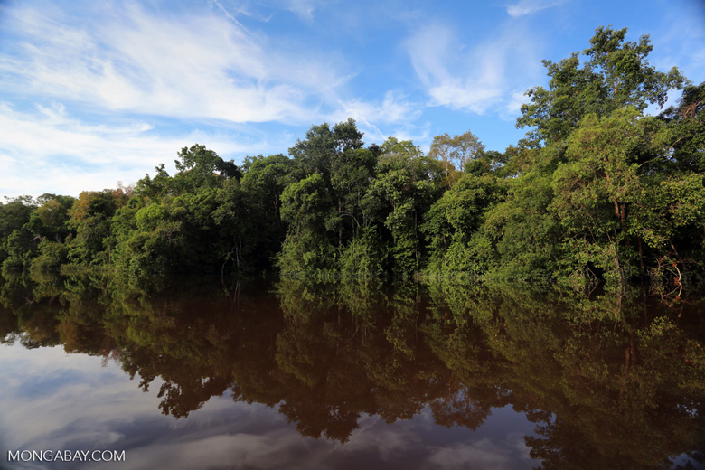 Peat forest in Borneo [kalteng_0645]