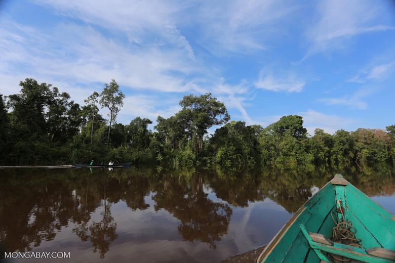 Peat forest in Borneo [kalteng_0693]