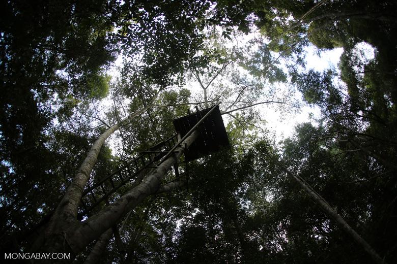 Observation platform in the Borneo rainforest [kalteng_1041]