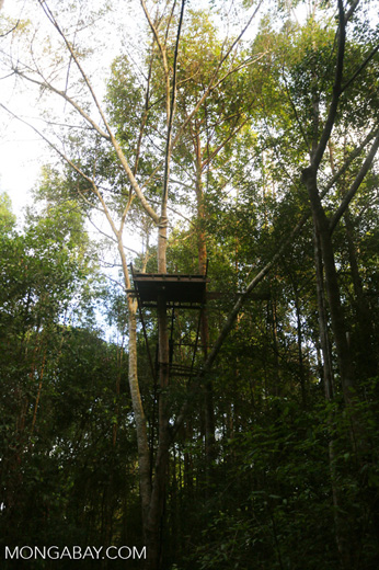 Observation platform in the Borneo rainforest [kalteng_1124]