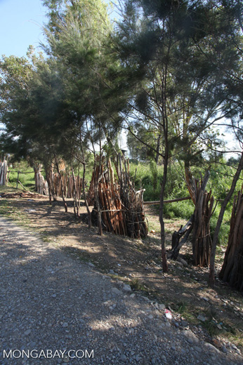 Wood for sale along a road in Wamena