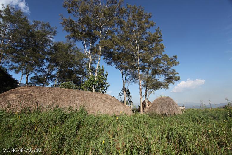 Grass huts in New Guinea