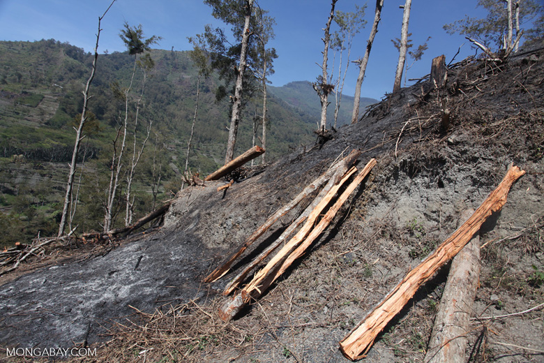 Logs on a hillside deforested for agriculture