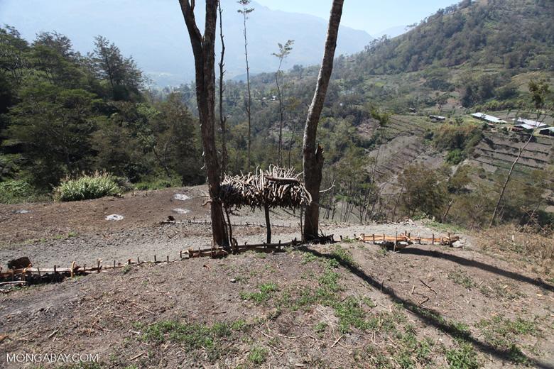 Fire wood in New Guinea