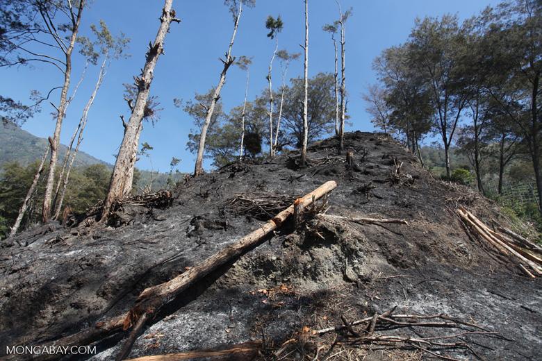 Logs on a hillside burned for agriculture