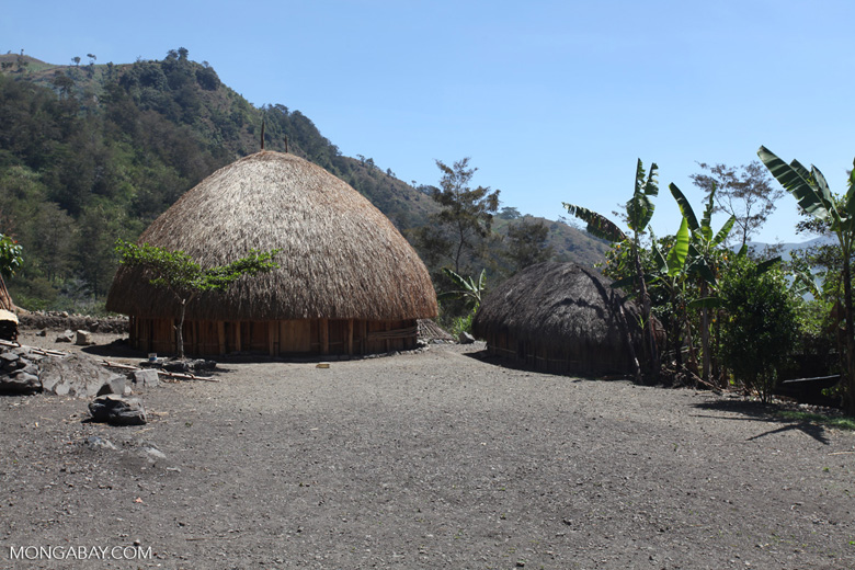 Grass hut in the New Guinea highlands