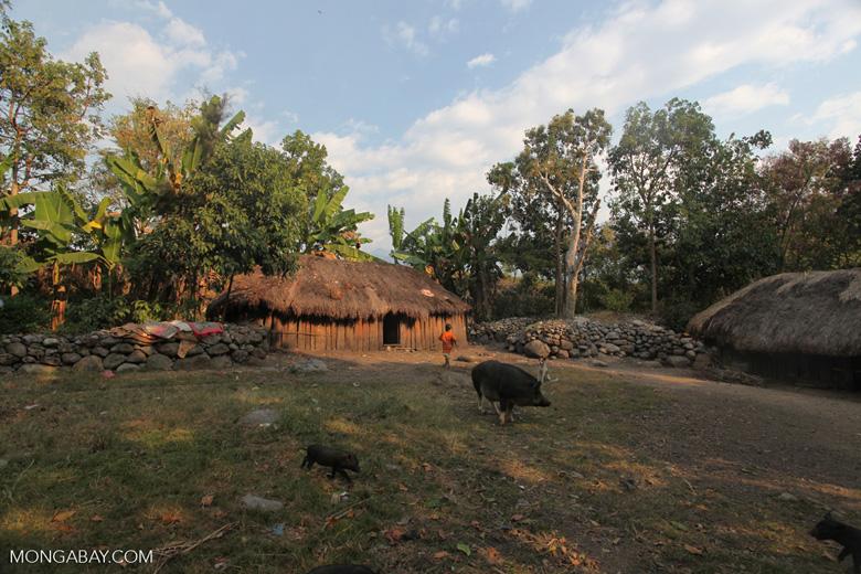Village near Wamena