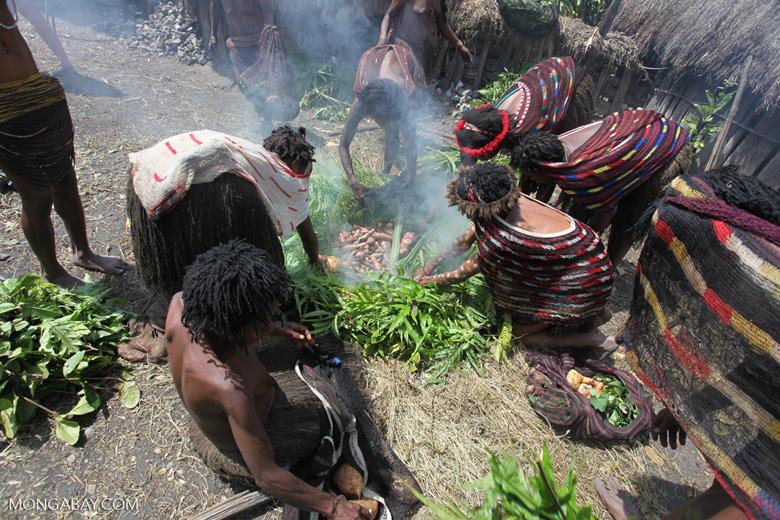 Dani highlanders preparing a feast in Indonesian New Guinea. Photo by Rhett A. Butler