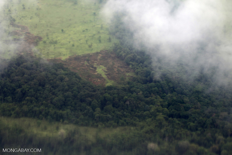 Aerial view of deforestation in New Guinea