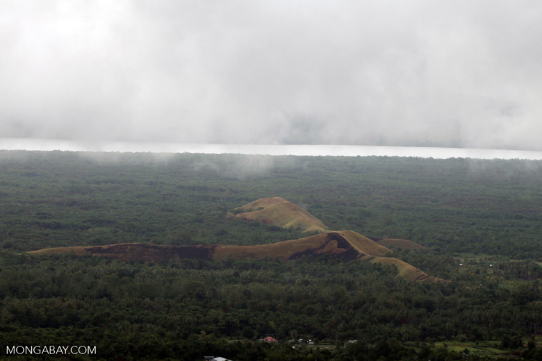 Deforested hills amid sago palms