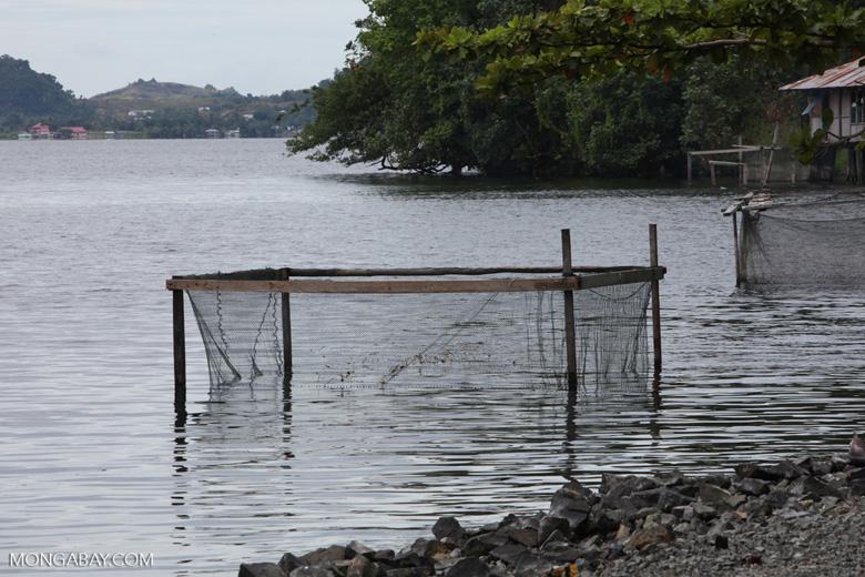 Fish net in Lake Sentani