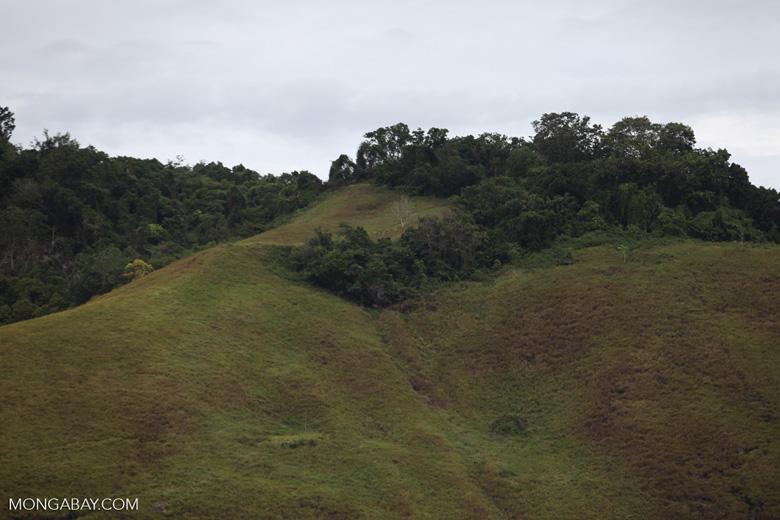Forest fragment on hills near Lake Sentani