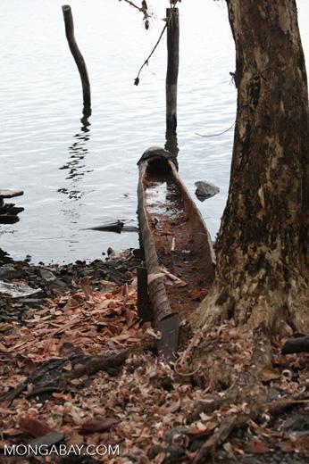 Freshly carved canoe