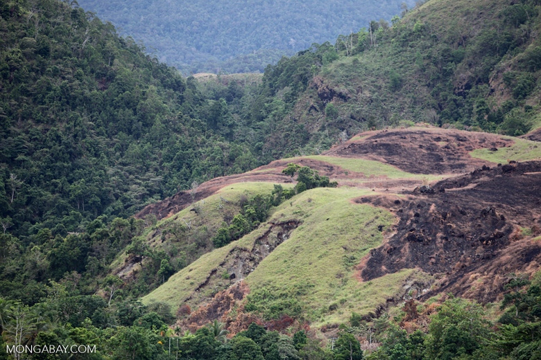 Deforestation around Lake Sentani