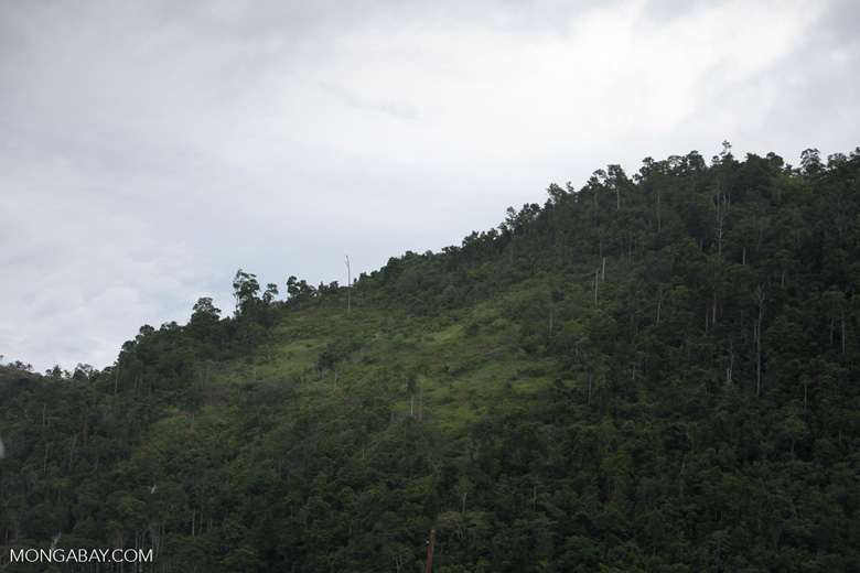 Deforested hillside near Jayapura along Lake Sentani