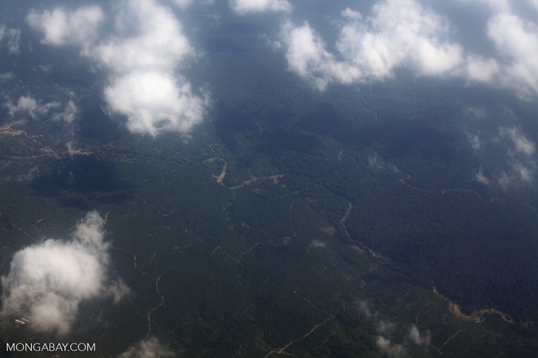 Aerial view of oil palm plantations in Indonesian New Guinea