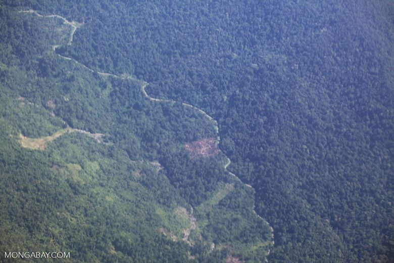 Aerial view of logged forest in New Guinea