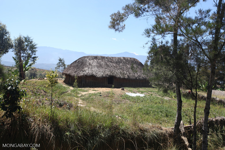 Lani huts in the Baliem Valley
