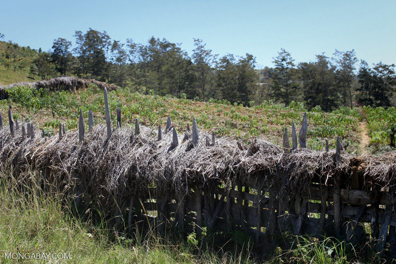Traditional fence in the highlands of New Guinea
