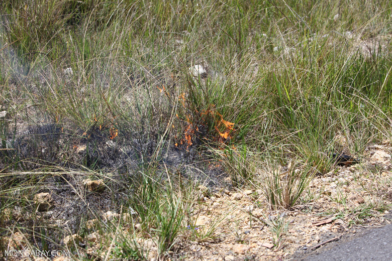 Grass fire in New Guinea