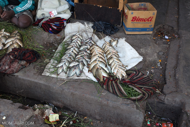 Fish for sale in New Guinea market