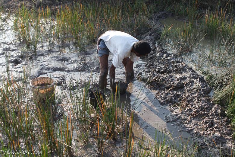 Man working in highland rice fields