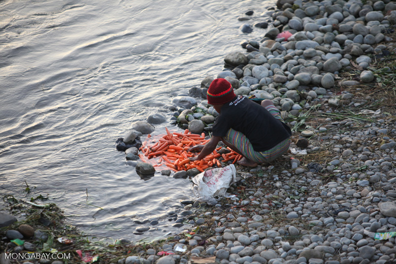 Carrots being prepared in a New Guinea river