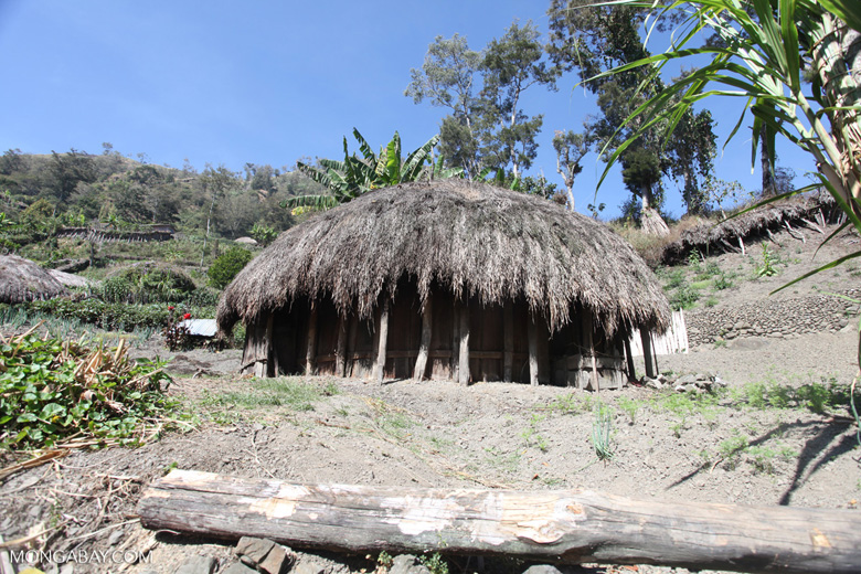 Grass hut in the highlands of New Guinea