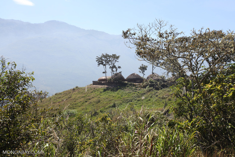 Highland Dani village in New Guinea's Baliem Valley