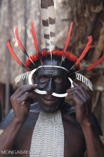 Papuan man removing the bone from his nose