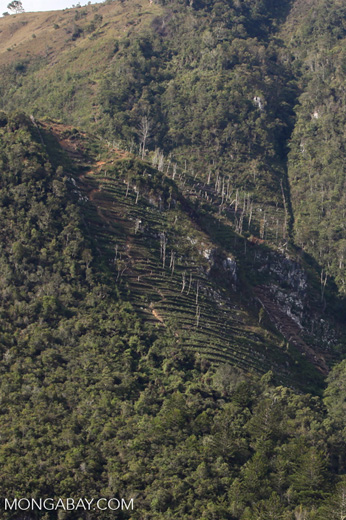 Terraced fields amid limestone rock formations in New Guinea