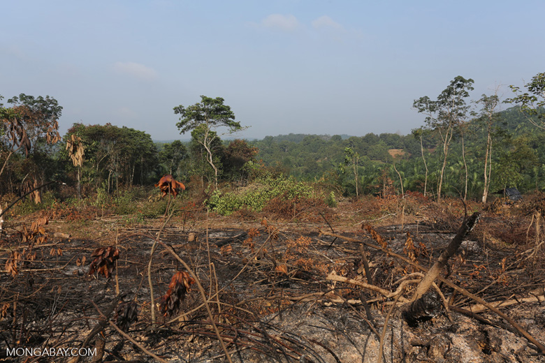 Forest clearing for oil palm [riau_0005]