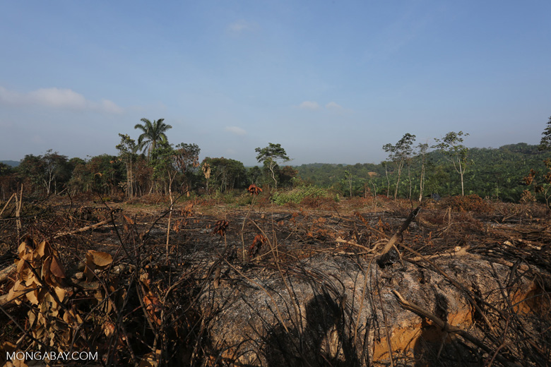 Forest clearing for oil palm [riau_0006]