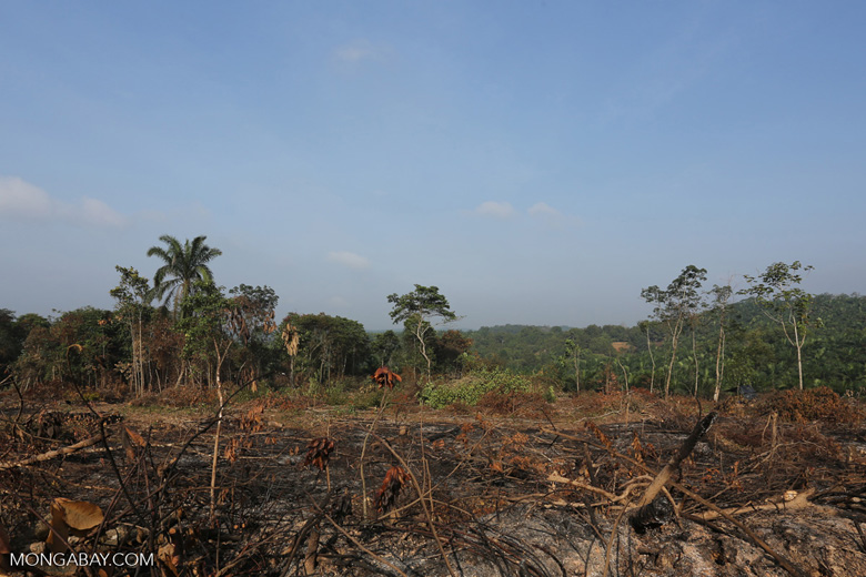 Forest clearing for oil palm [riau_0007]