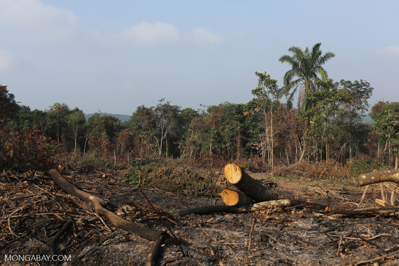 Forest clearing for oil palm [riau_0008]