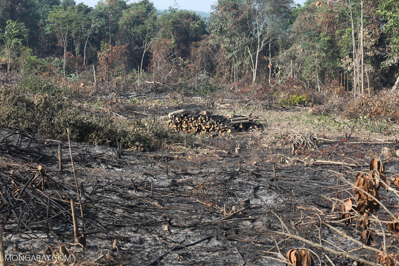 Forest clearing for oil palm [riau_0010]