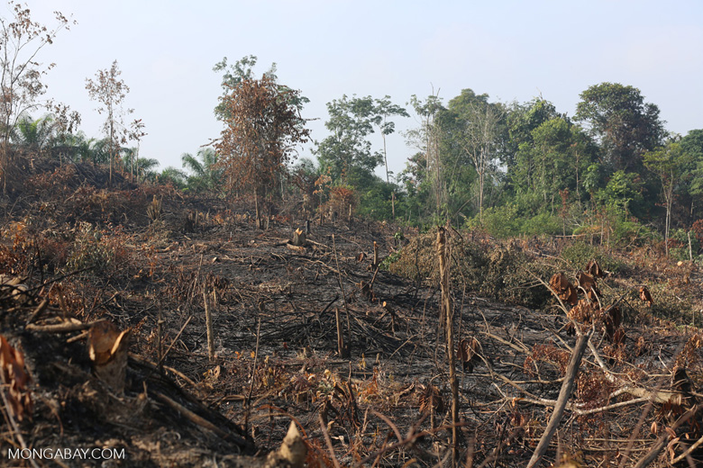 Forest clearing for oil palm [riau_0015]