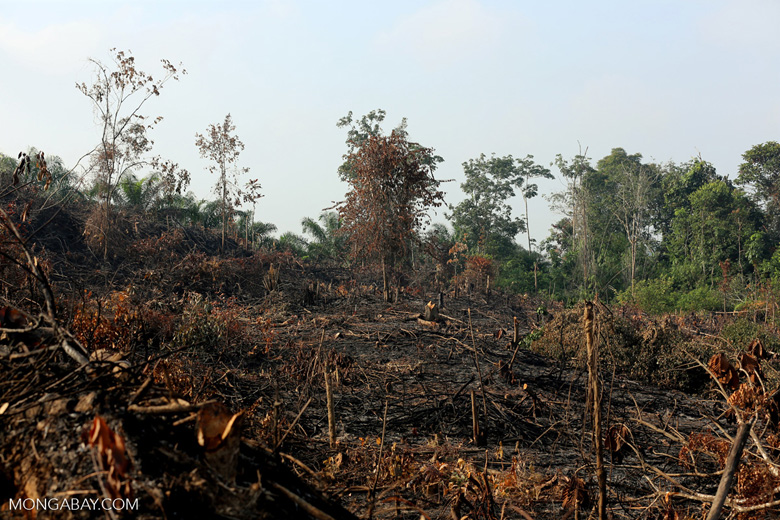 Forest clearing for oil palm [riau_0016]