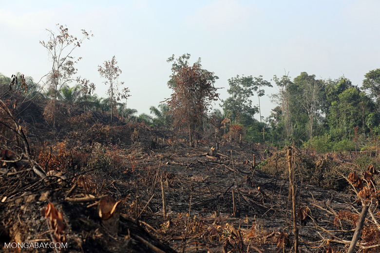 Forest clearing for oil palm [riau_0017]