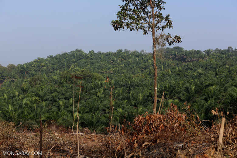 Forest clearing for oil palm [riau_0018]