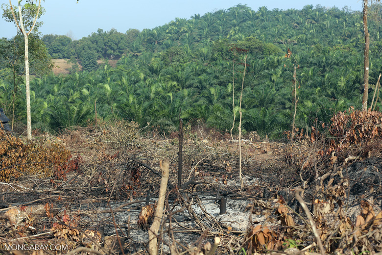 Forest clearing for oil palm [riau_0020]