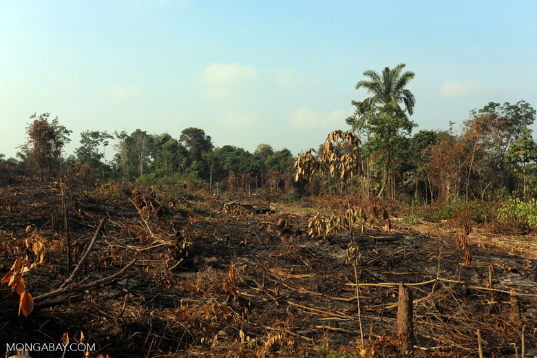 Forest clearing for oil palm [riau_0021]