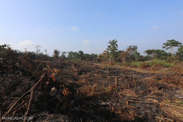 Forest clearing for oil palm [riau_0024]